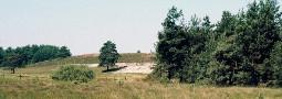 Verbreitung und Lebensräume der Waldeidechse