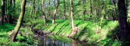 Gefährdung und Schutz des Teichmolchs