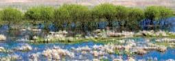 Die Rotbauchunke im Ökosystem Flussaue