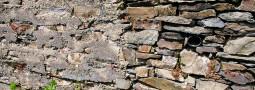 Gefährdung und Schutz der Mauereidechse