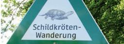 Gefährdungsstatus der Europäischen Sumpfschildkröte