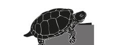 Jahrestagung zum Reptil des Jahres 2015 – Die Europäischen Sumpfschildkröte