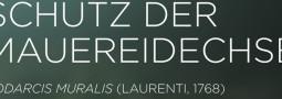 Mertensiella Band 22: Die Mauereidechse Podarcis muralis