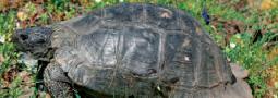 Langzeitstudie zur Populationsökologie von Testudo marginata und T. hermanni
