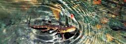 """Nachweis von bedrohten Reptilienpopulationen mittels """"environmental DNA"""""""