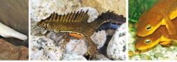 Mertensiella Band 26: Gefährdete Molch- und Salamanderarten Vol.2