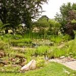 Amphibiengewässer im eigenen Garten, Foto: A. Geiger