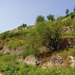 Wichtige Sonn-, Versteck- und Überwinterungsplätze sind Trockenmauern