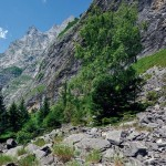 Lebensraum der Schlingnatter in den Alpen