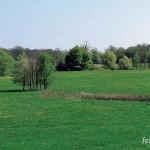 Typisches Landschaftsbild der Elbaue bei Wörlitz: Kleine Senke im Offenland, temporär mit Wasser gefüllt.
