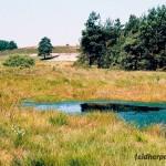 Strukturreicher Lebensraum in der Heide