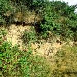 Abbruchkanten sind gute Mauereidechsenbiotope