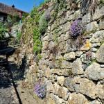 Unverfugte Trockenmauern sind wichtige Sekundärlebensräume