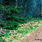 Typischer Lebensraum der Waldeidechse
