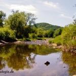 Naturnaher Lebensraum am Fluss Nahe