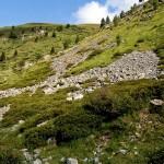 Natürlicher Lebensraum in der Schweiz