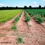 Sandige Böden werden vielfach als Landlebensraum genutzt