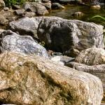 Steinige Ufersäume bieten geeignete Lebensraumstrukturen
