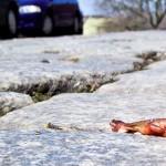 Der Teichmolch überquert bei seinen Wanderungen gefährliche Straßen