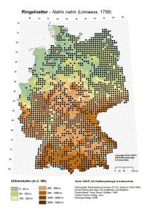 Verbreitungskarte Ringelnatter - Natrix natrix (Linnaeus, 1758)