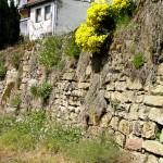 Lebensraum der Mauereidechse (Podarcis muralis), Trockenmauer in Bollendorf, Foto: Ulrich Schulte