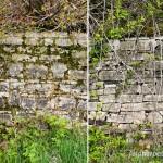 Lebensraum Mauereidechse (Podarcis muralis), links verfugte Trockenmauer, rechts unverfugte Trockenmauer - Kanzem, Saar 22.04.2013