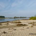Lebensraum der Knoblauchkröte (Pelobates fuscus), Dünen an der Elbe bei Sandau, Sachsen-Anhalt, Deutschland, Foto: Andreas Nöllert