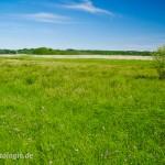Lebensraum des Moorfrosches (Rana a. arvalis) im Rambower Moor, Brandenburg, Deutschland, 26.05.2012, Foto: Andreas Nöllert