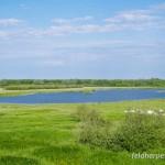 Lebensraum des europäischen Laubfroschs (Hyla arborea), renaturierter Auenbereich der Elbe bei Lenzen, Brandenburg, Deutschland, 27.05.2012, Foto: Andreas Nöllert