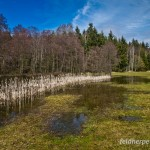 """Grasfrosch (Rana temporaria), Laichgewässer, NSG """"Dreba-Plothener Teichgebiet"""", Plothen, Thüringen, Deutschland, 14.04.2013, Foto: Andreas Nöllert"""