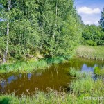 Fadenmolch (Lissotriton helveticus), Teich bei Sophienhof/Harz, Thüringen, Deutschland, 17.08.2012, Foto: Andreas Nöllert
