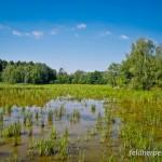 """Kleiner Wasserfrosch (Pelophylax lessonae). Im NSG """"Plothen-Drebaer Teichgebiet"""" siedelt eine sehr individuenreiche Population der Art. Plothen, Thüringen, Deutschland, 14.08.2012, Foto: Andreas Nöllert"""