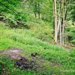 """Fadenmolch (Lissotriton helveticus), Wasser gefüllte Fahrspurrinnen und Wildsuhle in einem Rot-Buchen-Wald im NSG """"Brandesbachtal"""" bei Netzkater/Harz, Thüringen, Deutschland, 17.08.2012, Foto: Andreas Nöllert"""