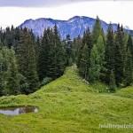Laichgewässer der Gelbbauchunke in in der Steiermark auf 1.200 m ü. NN; Foto: R. Podloucky