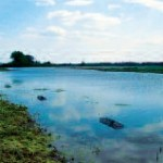 Typische Laichgewässer für B. bombina: (großes Bild) Qualmwasser hinter dem Deich, (kleines Bild) neugeschaffene Überflutungsflächen vor dem neuen Deich