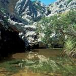Mikrohabitat der Mallorca-Geburtshelferkröte (Alytes muletensis). Auf Mallorca wurde der Chytridpilz durch ausgewilderte Tiere unabsichtlich eingeschleppt. Foto: B. Schmidt