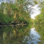 Dieser Altarm im Nationalpark Donau-Auen (Tiergartenarm) ist ein idealer Lebensraum für Europäische Sumpfschildkröten; Foto: Nationalpark Donau-Auen