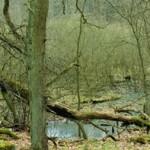 Überwinterungsgewässer von E. orbicularis; Foto: N. Schneeweiß