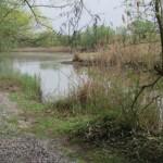 Idealer Lebensraum: strukturierte Gewässer- und deckungsreiche Uferpartien; Foto: N. Schneeweiß