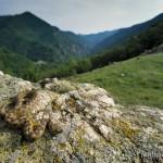 Vipera ammodytes montandoni, Weibchen, Balkangebirge nördlich Koprivštica, Oblast Sofiya, Mai 2003, Foto T. Pröhl (www.fokus-natur.de)