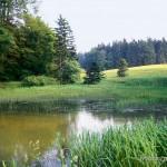 """Lissotriton helveticus helveticus. """"Klassisches Fundgebiet"""" im Nordwesten des Mittleren Thüringer Waldes am """"Ringberg"""" bei Ruhla. Der Fundort wurde 1891 von Dr. WILLY WOLTERSTORFF erwähnt. Wartburgkreis, Freistaat Thüringen, Juni 1993, Foto A.+Ch. Nöllert."""