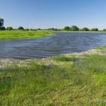 """Lebensraum und Reproduktionsgewässer Bombina bombina, Damnatz (""""Qualmwasser"""" hinter Elbe-Deich), Landkreis Lüchow-Dannenberg, Niedersachsen, 25.05.2012, Foto A.+Ch. Nöllert."""