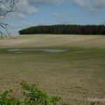 Bufotes viridis complex (viridis), vom Niederschlagswasser gespeistes Laichgewässer bei Neupoderschau, Landkreis Altenburger Land, Freistaat Thüringen, 17.05.2012, Foto A.+Ch. Nöllert.