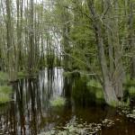 """Laichgewässer und Lebensraum Rana arvalis arvalis, FND """"Wildbruch"""" bei Grauenhagen, Landkreis Mecklenburgische Seenplatte, Mecklenburg-Vorpommern, 18.05.2010, Foto A. Ritter."""