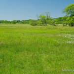 "Landlebensraum Rana arvalis arvalis, NSG ""Rambower Moor"" bei Rambow, Landkreis Prignitz, Brandenburg, 26.05.2012, Foto A.+Ch. Nöllert."