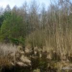 Laichgewässer Rana dalmatina, Ziegelrodaer Forst bei Ziegelroda (Querfurt), Saalkreis, Sachsen-Anhalt, 08.03.2014, Foto A.+Ch. Nöllert.