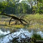 Lebensraum Emys orbicularis orbicularis, Brandenburg, Foto N. Schneeweiß.