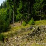 """Lebensraum von Anguis fragilis im NSG """"Waldnaabtal"""", östlich von Bernstein (Falkenberg), Landkreis Tirschenreuth, Oberpfalz, Freistaat Bayern, 19.09.2014, Foto A.+Ch. Nöllert."""