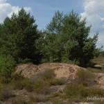 Lebensraum Lacerta viridis viridis, Brandenburg, Foto N. Schneeweiß.