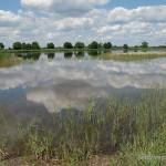 Lebensraum Natrix natrix natrix, Niederlausitzer Teichgebiet bei Peitz, Landkreis Spree-Neiße, Brandenburg, 17.06.2008, Foto N. Schneeweiß.